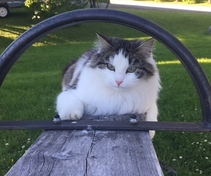 cat, outside, and playground image