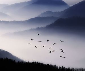 bird, nature, and mountains image