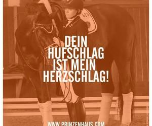 animals, beautiful, and german image