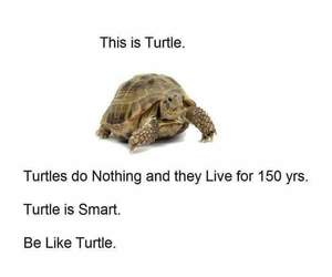 turtle and lol image