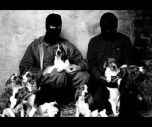 animal liberation front and alf image