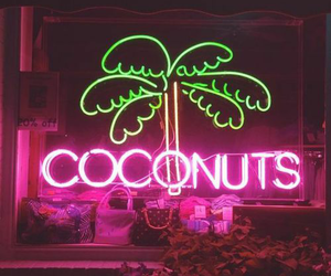 neon, coconuts, and pink image