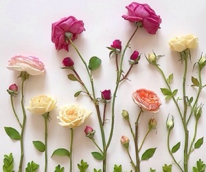 flowers, roses, and flatlay image