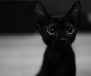 black cat, cute, and cat image