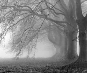 bois, boos, and dark image