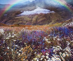 flowers, nature, and rainbow image