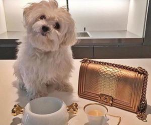 fashion, dog, and puppy image