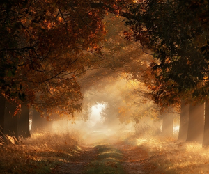 amazing, forest, and light image