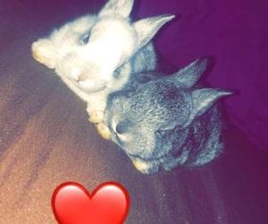 bunny, bad bunny, and love image
