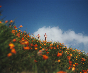 colors, grass, and flowers image