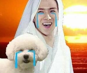 exo, meme, and sehun image