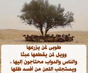 اشجار, ظل, and الصيف image