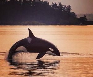 dolphin and nature image