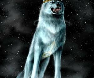 dog, fantasy, and universe image