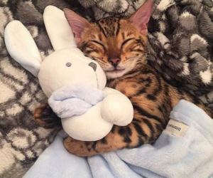 cat, sweety, and cute image