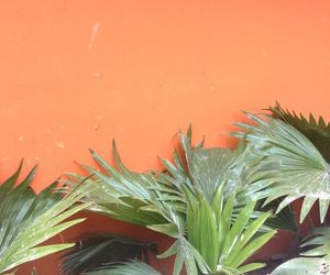 orange, aesthetic, and plants image
