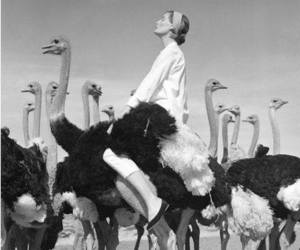 black and white, ostrich, and photography image