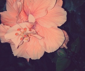 aesthetic, flower, and nature image