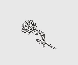 aesthetic, drawing, and rose image