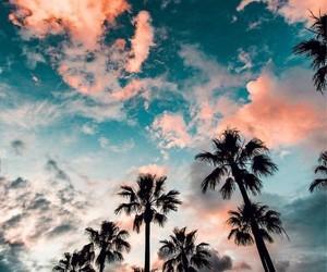 palms and sky image
