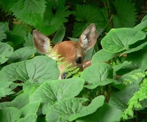 animal, green, and deer image