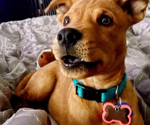 dog, puppy, and scooby doo image