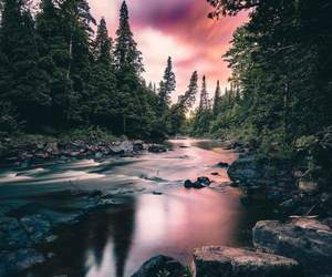 forest, purple, and sunset image