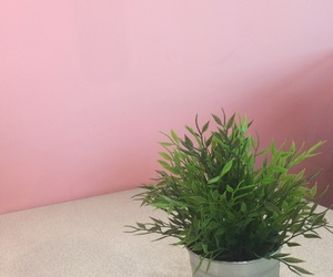 background, succulent, and pink image