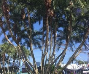 backround, florida, and palm trees image