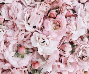 beauty, flowers, and roses image