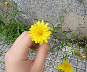 flower, yellow, and tumblr image