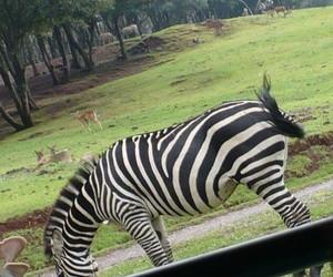 animals, verano, and selva image