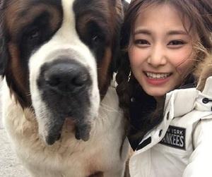 twice, tzuyu, and kpop image