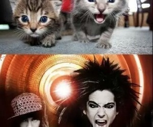 tokio hotel, bill kaulitz, and cat image
