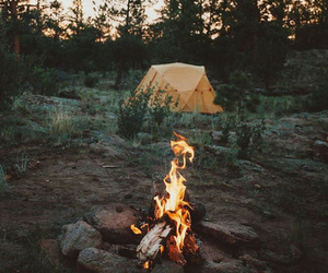 fire, nature, and trees image