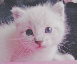 gato, kitty, and romance image