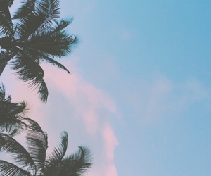 palm, trees, and sky image
