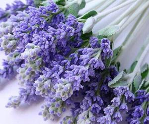 flowers and lavender image