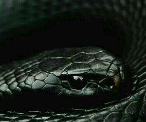 snake, black, and slytherin image