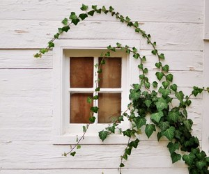 window, photography, and plants image