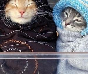 cat, kitten, and winter image