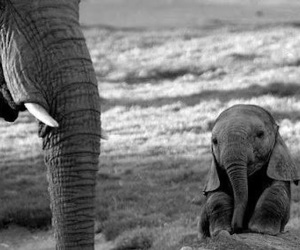 adorable, elephant, and cute image