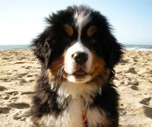 beach, dog, and puppy image