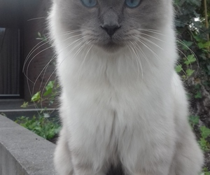 beautiful eyes, cat, and pretty cat image