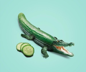cucumber, crocodile, and green image