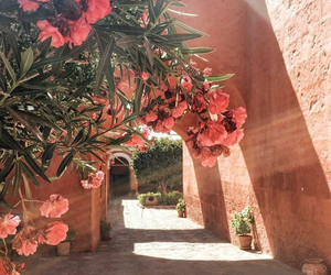 flowers, travel, and pink image