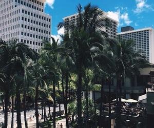 hawaii, palm, and trees image