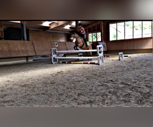 horses, horse jumping, and springen image