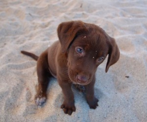adorable, puppy, and beach image
