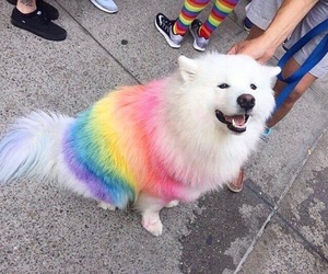 dog, animal, and rainbow image
